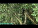BBC «Тропический рай Борнео» (Документальный, 2007) 1 серия