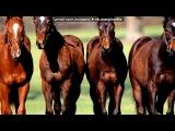 «лошади» под музыку Jandro - Я помню тебя, я помню те дни,  когда  в целом свете  с тобой мы были одни, но вспомнишь ли ты минуты любви,которые вместе с тобой мы провели.... Picrolla