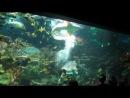 Океанариум_СПБ (28.12.2013) - Шоу-танцы с акулами