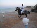 На свадьбе в египте, лошадка танцует)