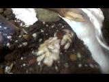 Новорождённые мадагаскарские тараканы