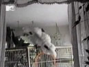 Добрый вечер, животные! Выпуск 8 (эфир 24.10.2012)