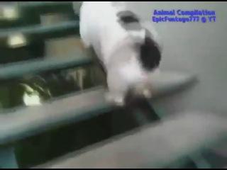 Самые смешные приколы с животными.