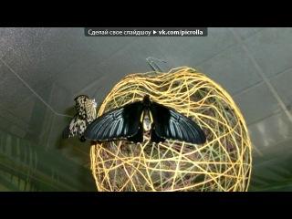 «фото» под музыку DJ Дождик - песня старая, но классная. Picrolla