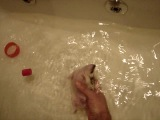 Ежики умеют плавать!!!