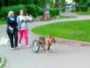 Собака в парке между Самотечной ул и Олимпийский пр