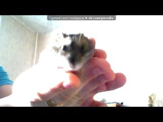 «Webcam Toy» под музыку Шедевры Инструментальной Музыки - В мире животных [Все домашние и дикие животные]. Picrolla