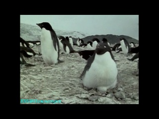 BBC Чудеса живой природы 3 Великие вехи Документальный 1996
