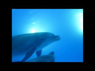 Заглянув в глаза дельфинам...