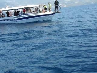 Дельфин Лос-Гигантес Тенерифе Канарские острова