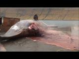 А вы видели, как умирают киты?