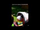 «Моё День Рождения)))))))))))» под музыку Виталя[Джа] ft. Белый[Химарь Edition] - Все будет брат [2012].mp3. Picrolla