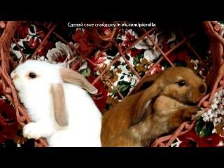 «Кролики и Зайцы» под музыку КоТ - Про кроликов.... Picrolla