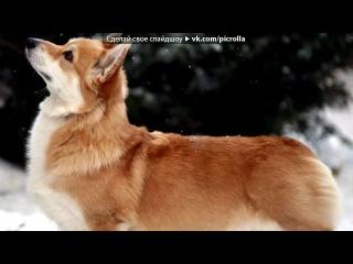 «Красивые Фото • fotiko.ru» под музыку moleshtianu Молдавские песни - Джага-Джага. Picrolla