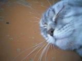 Мой кот дурак:)