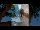 класні фоті под музыку Елвин и бурундуки Двигай задом Picrolla