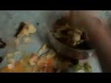 хахах)))вот  как я буду готовить своей девушке