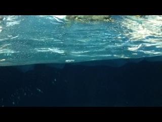 Пингвины в Лоро Парке о.Тенерифе