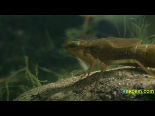 BBC Wildlife on One - Dragonfly, Beauty or Beast