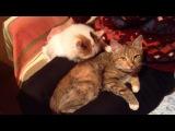 Нежные нежности (данные котята ищут хозяина!)