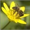 Мед, прополис, маточное молочко и пыльца  - здоровье, долголетие и красота! Скидки! Свой Бизнес! Тенториум (г.Уфа)