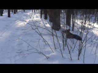 Прогулка с Бартом 2013-02-03