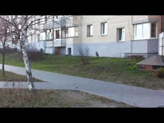 Олень бегает по уручью 6 в Минске) вот это прикол)