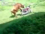 Сердцу, как говорится, не прикажешь :) Любовь зла - полюбишь и мотоцикл