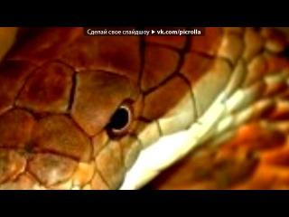 «С моей стены» под музыку Gemini - Crew Love. Picrolla