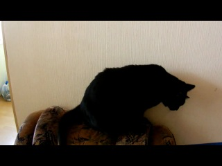 Исхудавший котик