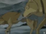 AMV - David Guetta - She Wolf Falling To Pieces feat. Sia - Wolfs Rain