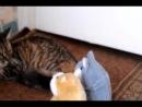 Кошка и говорящие хомяки )))))
