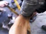 собачьи бои бультерьер против питтбуля