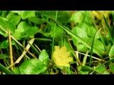 Балаган лимитед - Ой у вишневому саду