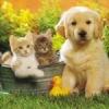 ..ღ..Клуб любителей домашних животных в Великом Новгороде..ღ..