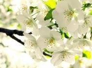 Весна не за горами!!!