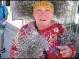 Привет от друзей и бабы Люды с травой поебенью из Коктебеля)))))