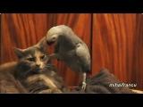 Кот, котик, смешно, угар, ржач, до слёз, Кеша, озвучка, мимими, попугай, мило :)