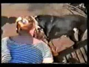 Собачьи бои Боря(стафф) vs Гектор(пит)