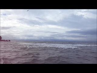 одно из лучших времен рыбалки в Тихом океане невероятный Группа рыб Yellow Jack