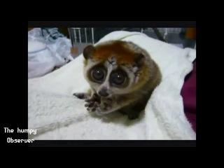 Нереально милое видео про животных