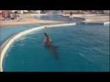 Синеглазые дельфины)