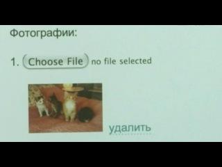 Отдам котят в хорошие руки [2012] vipzal.tv