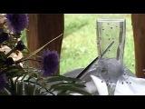 Видео свадебный клип Юры и Вики - Александр Зинченко
