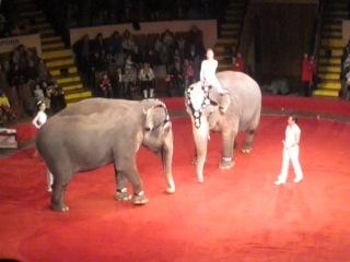 Немецкий цирк на слонах!!!!!!!!!!!!!