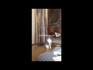 Кошка моя - охотница на змей 2