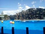 Dolphin show. Batumi