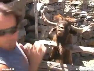 Болтливый испанец хотел взять у козла интервью, но козёл орал на него и плевался...