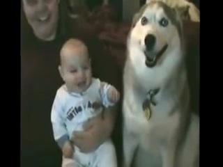 приколы с животными и детьми.