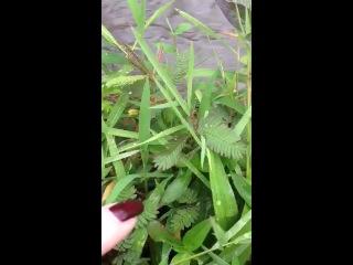 -На Бали всё необычно- даже растения!-